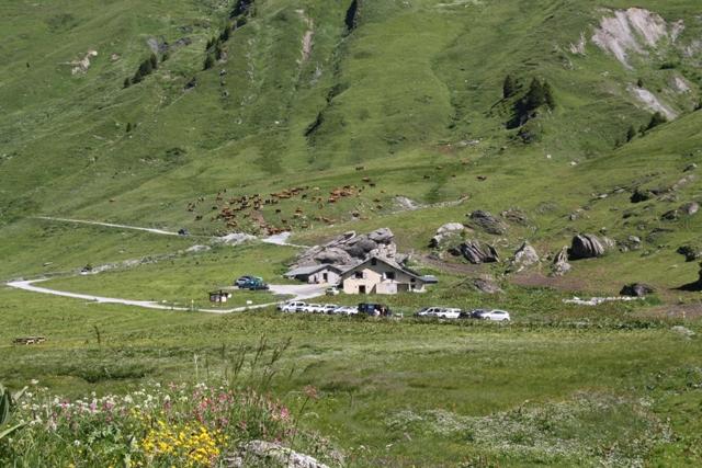 Le QG de Plan Pichu, la laiterie de l'alpage, et un des troupeaux